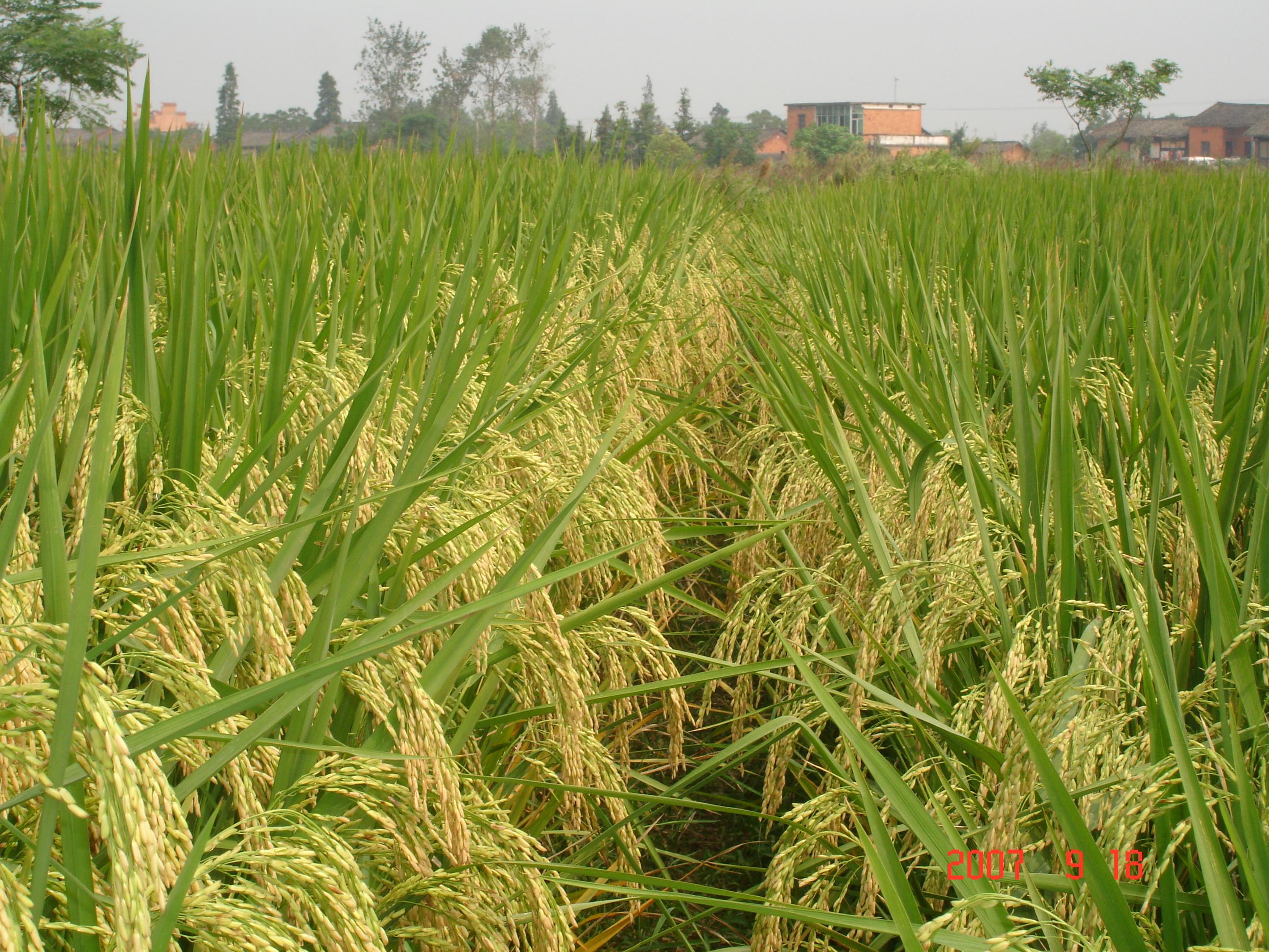 农业农村经济总体平稳